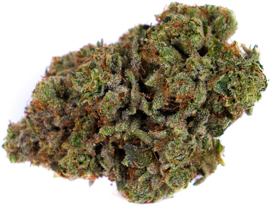 Gorilla-Glue-Cannabis-Strain-campnova-online