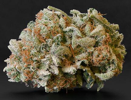 marijuana flower close up-Cannabis bud photography-campnova-online